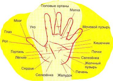 Диагностика заболеваний по рукам